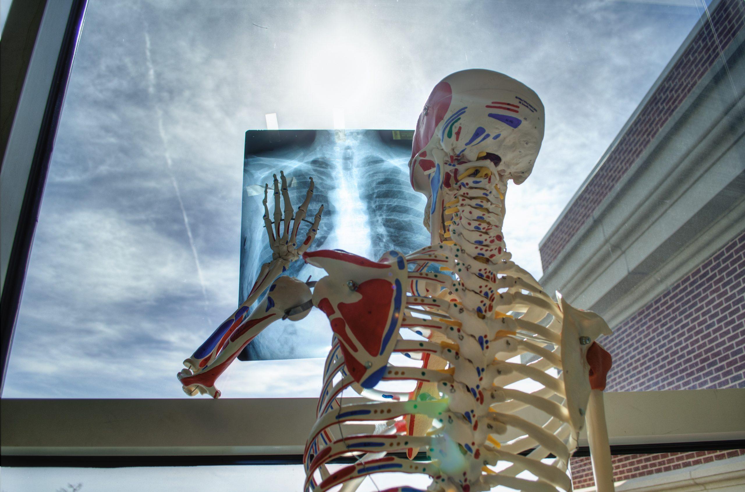 Skelett mit Thorax